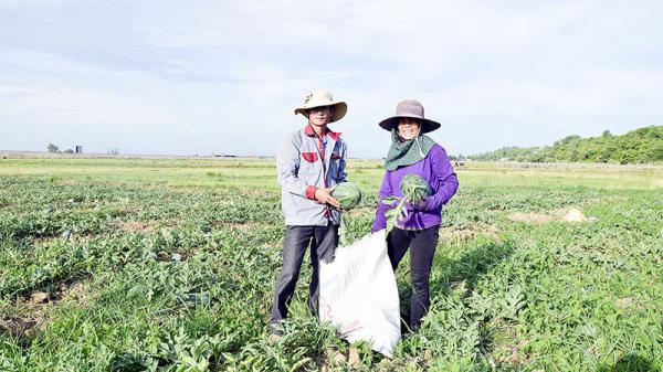Quảng Trị: Người dân phấn khởi vì được mùa dưa hấu