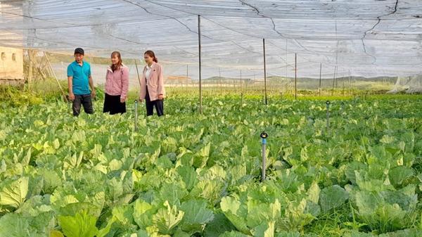 Quảng Trị: Rời bỏ thành phố lớn, về quê khởi nghiệp với mô hình trồng rau công nghệ cao