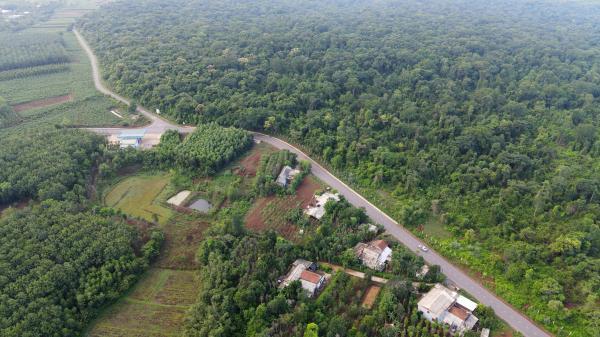 Rừng nguyên sinh duy nhất ở đồng bằng tỉnh Quảng Trị