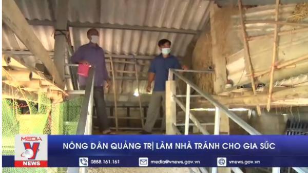 Nông dân Quảng Trị làm nhà tránh lũ cho gia súc