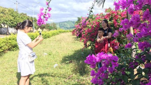 Sắc hoa giấy mang xuân về thị trấn vùng biên Lao Bảo